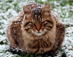 chilly kitty