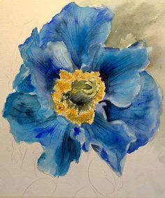 himalayan blue poppy - Recherche Google