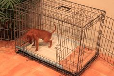 Potty Training a Puppy? We have a Fast & Easy solution! Over 40,000 dogs have been successfully potty trained with our system. Works as Fast as 3 days! Please visit our website for more details: ModernPuppies.com