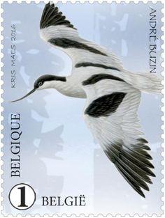 Stamp: Avocet (Recurvirostra avosetta) (Belgium) (Zwin Nature Park) Mi:BE 4650,Yt:BE 4574,Bel:BE 4604