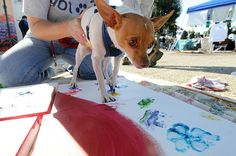 Zee adds his painted paw to a canvas filled with prints from dogs available for adoption during Paws For A Cause at Seal Beach Animal Care Center on Sunday.     Learn about animal care