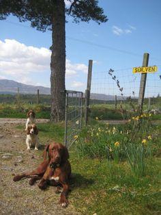 Volunteer near Loch Ness. Pet Dogs, Scotland, Animals, Animales, Animaux, Doggies, Animais, Dogs, Animal