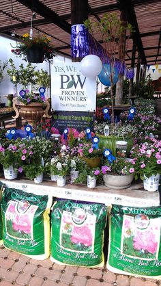 Proven Winners at Calloway's Nursery in Flower Mound Flower Mound, Proven Winners, Nursery, Table Decorations, Flowers, Plants, Home Decor, Fashion, Moda