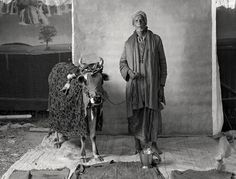 Marginal Trades by Supranav Dash l Holy (Ritualistic) Brahmin with deformed cow l #India