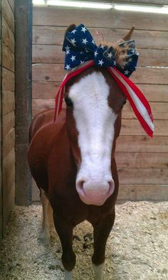 Wearing a patriotic bow!