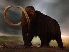 Os mamutes ainda existiam na Terra na época em que as pirâmides foram construídas. Source: Reddit/midnightschild - Flickr/Tristen