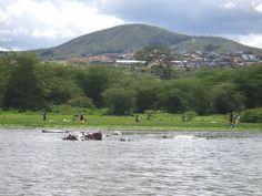 Hippo Cruise, Lake Naivasha Nairobi, African Safari, Cruise, Mountains, Nature, Travel, Naturaleza, Viajes, Cruises