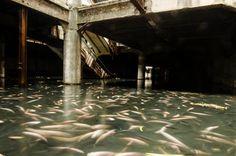 Centre commercial à l'abandon transformé en aquarium !