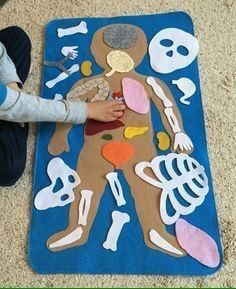 """Educational Felt Human Anatomy/ """"Parts of the Body""""/ Human A.- Educational Felt Human Anatomy/ """"Parts of the Body""""/ Human Anatomy Felt Set/Montessori Toy/Science Toy Educational Felt Human Anatomy/ Parts of by LupitasLovelyCrafts More - # Kid Science, Science Toys, Science Activities, Preschool Activities, Science Ideas, Science Centers, Science Crafts, Children Activities, Science Projects"""