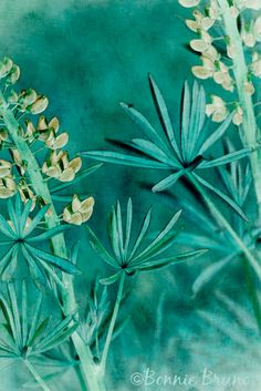 WILD LUPINE floral art print  teal turquoise yellow by BonnieBruno