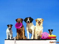 All breed dog world