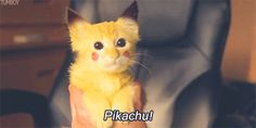 pikachu cat kitty gif so fucking cute Pikachu Pikachu, Baby Animals, Funny Animals, Cute Animals, Gato Gif, Funny Cat Videos, Funny Gifs, Cool Pets, Funny Cute