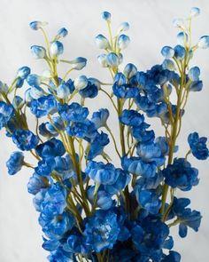 These Blue Delphiniu