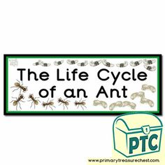 Life Cycle Themed Resources - Primary Treasure Chest Teaching Resources, Teaching Ideas, Classroom Banner, Ourselves Topic, Key Stage 1, Display Banners, Sound Art, Preschool Printables, Letter Sounds