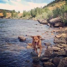 dog parks colorado