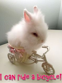CCute Animals: I can ride a bicycle