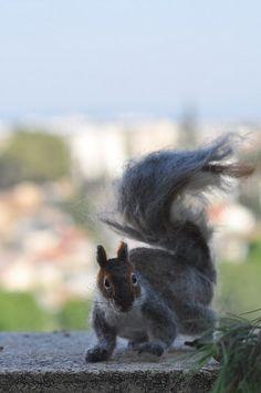 needle felted gray squirrel.. by daria.lvovsky, via Flickr