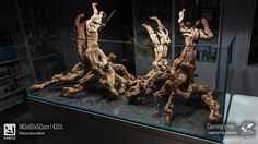 Layout: hardscape by Piotr Dymowski Those vine woods look incredible. This will become another stunning tank! Photo credit by Marcin Wnuk.