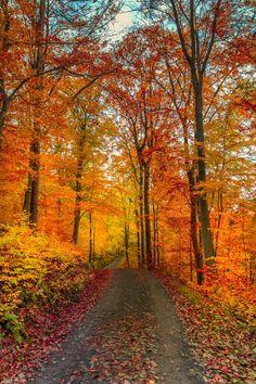 Autumn by Gergely Németi on 500px