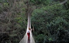 #10 Rainforest canopy walkway Peru's jungle can be viewed at its best from the Amazon's longest tree-top canopy walkway, reaching 35m above ground at the Amazon Explorama Field Station.     Read more: http://www.roughguides.com/destinations/south-america/peru/things-not-to-miss/#ixzz2tUiF43qk