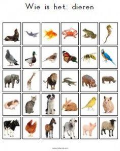 Guess Who Animals Printable Childhood Education, Kids Education, Class Pet, Vip Kid, Baby Quiet Book, Kindergarten Lessons, Bible Crafts, Activities For Kids, Preschool