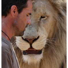 """The Lion Whisperer: Kevin Richardson plays with white lions at a game park in South Africa"" via the telegraph #Nature #Awesome"