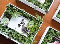Make a Succulent Frame | Rue
