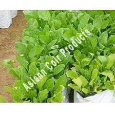 Spinach Grow Bags