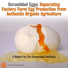 The Cornucopia Institute report, Scrambled Eggs: Separating Factory Farm Egg Production from Authentic Organic Agriculture. http://www.cornucopia.org/2010/09/organic-egg-report-and-scorecard This report will empower consumers and wholesale buyers who want to invest their food dollars to protect hard-working family farmers that are in danger of being forced off the land by a landslide of eggs from factory farms. #Eggs #OrganicEggs #Scorecard #Report #Food #Farmers