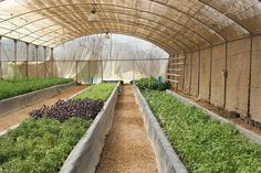 Farming Fish and Lettuce in the Egyptian Desert... Against the odds, one Egyptian farm is attempting to grow fish and produce in the Sahara—but is this a real oasis or just a mirage? ... #Aquaponics #Hydroponics #Gardening #Design