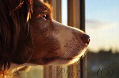 How to Photograph Pets: 16 Tips to Capture the Perfect Shot
