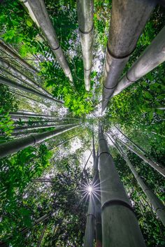 Lights of Kyoto - From the Bamboo Forest in Kyoto, Japan