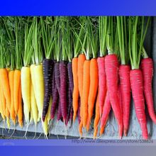 Heirloom Rainbow Yellow White Purple Orange Red Carrot Vegetable Mixed Seeds, Professional Pack, 1 Packs, 100 seeds, Tasty NF943(China (Mainland))