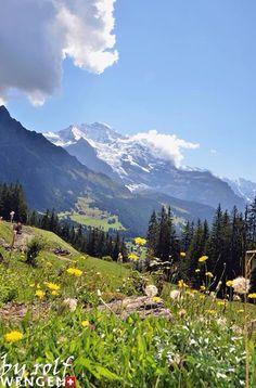 Beautiful view near Wengen, it´s true, Switzerland is covered by flowers. So pretty