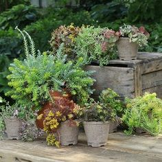 Sedum Care Tips and Types to Try in Your Garden plants flowers plants ideas plants landscaping plants perennials Best Perennials, Hardy Perennials, Flowers Perennials, Purple Perennials, Perennials Fabric, Shade Flowers, Lavender Flowers, Shade Plants, Flowers Garden