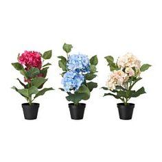 Macetas, plantas y soportes - Flores secas y popurrí - IKEA