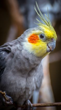 trendy ideas for best pet bird animals Rare Birds, Exotic Birds, Tropical Birds, Colorful Birds, Most Beautiful Animals, Beautiful Birds, Best Pet Birds, Parrot Pet, Funny Parrots