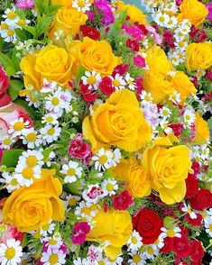 Beautiful Rose From My Heart Flowers Nature, Exotic Flowers, Amazing Flowers, Beautiful Roses, Colorful Flowers, Beautiful Gardens, Beautiful Flowers, White Flowers, Beautiful Flower Arrangements