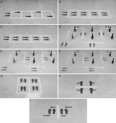 Figure 1. ladder exercise