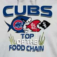 Fins to the left Fins to the right CUBS eating good alright Chicago Cubs Pictures, Chicago Cubs Fans, Chicago Cubs Baseball, Cubs Gear, Cubs Games, Cubs Win, Go Cubs Go, Mlb Teams, Sports Teams