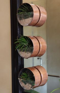 These mini air plant gardens are easy to make and will add a cute and interesting element to you indoor areas. Add a magnet and hang on your fridge or stick them up in your bathroom. Watch our video to see step-by-step instructions.   #airplants #minigardens #decor #indoorplants #houseplants #easydiy #doityourself #makeyourown #project Air Plants, Indoor Plants, Make Your Own, How To Make, Step By Step Instructions, Houseplants, Easy Diy, Planter Pots, Gardens