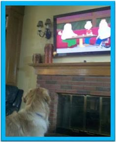 What does your dog like to watch? Article on de-stressing dogs and dog TV. http://elimaysupplements.blogspot.com/2012/09/dog-luxuries-part-three.html