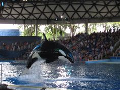 Sea World! Been to San Diego and Orlando!