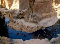 Knee deep wading is bliss for camels in Chad's Archei, a canyon whose trapped waters hold a zoological surprise.  Fertilized by beast's dropping, algae are eaten by fish that are preyed upon by an isolated group of crocodiles