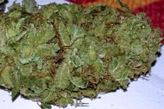 Juicy Fruit weed - funny name, funny cannabis - can;t decide if I love it or not but it's different which is always nice