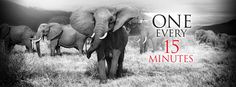 One elephant is killed every 15 minutes, at this rate none will be roaming in 2025. Take action!