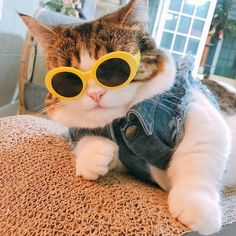 If you're trying to snap some pics of your feline looking a little fancier than usual, consider getting them to sport a pair of sunglasses for a quick picture. Cute Funny Animals, Cute Baby Animals, Funny Cats, Cute Dogs, Cute Kittens, Cool Cats, Gatos Cool, Cat Icon, Cute Cat Wallpaper