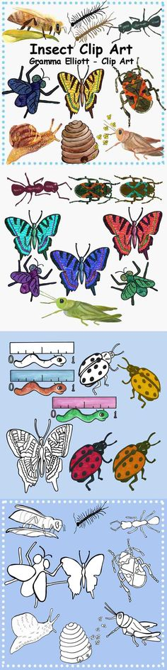 This Clip Art Folder includes insects and more -- a black line and color clip art image for each item: Ant, Bee, Bug, Butterfly, Centipede, Fly, Grasshopper, Hive, Inchworm, Ladybug, Louse, and Snail.