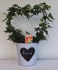 Wonderful Ivy Potted Plant in a Heart Shape -Evergreen indoor plant - hedera green leaf heart - Gift, present, for Christmas, wedding, valentines, anniversary, birthday, xmas, for him, her, husband, wife, parents, mum, dad, brother, sister, girlfriend. Best4garden http://www.amazon.co.uk/dp/B00QX8G3RC/ref=cm_sw_r_pi_dp_vfGpwb15E1XH3