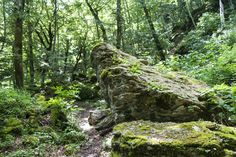 "La verna forest - ""Two Wild Days in the Romagna Apennines"" by @crowdedplanet"